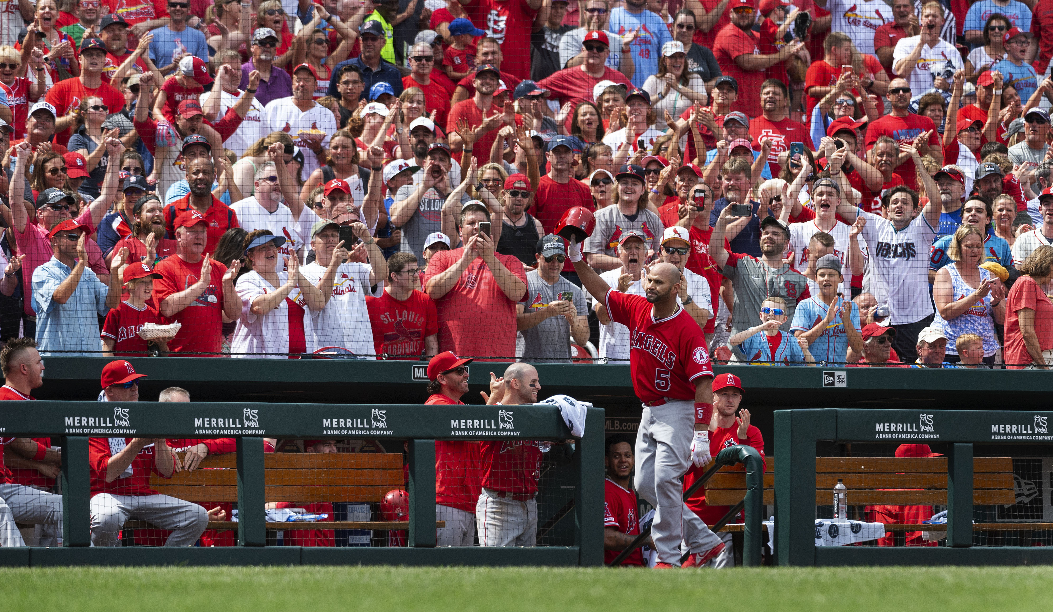 Pujols curtain call HR for Angels vs hometown Cards in loss