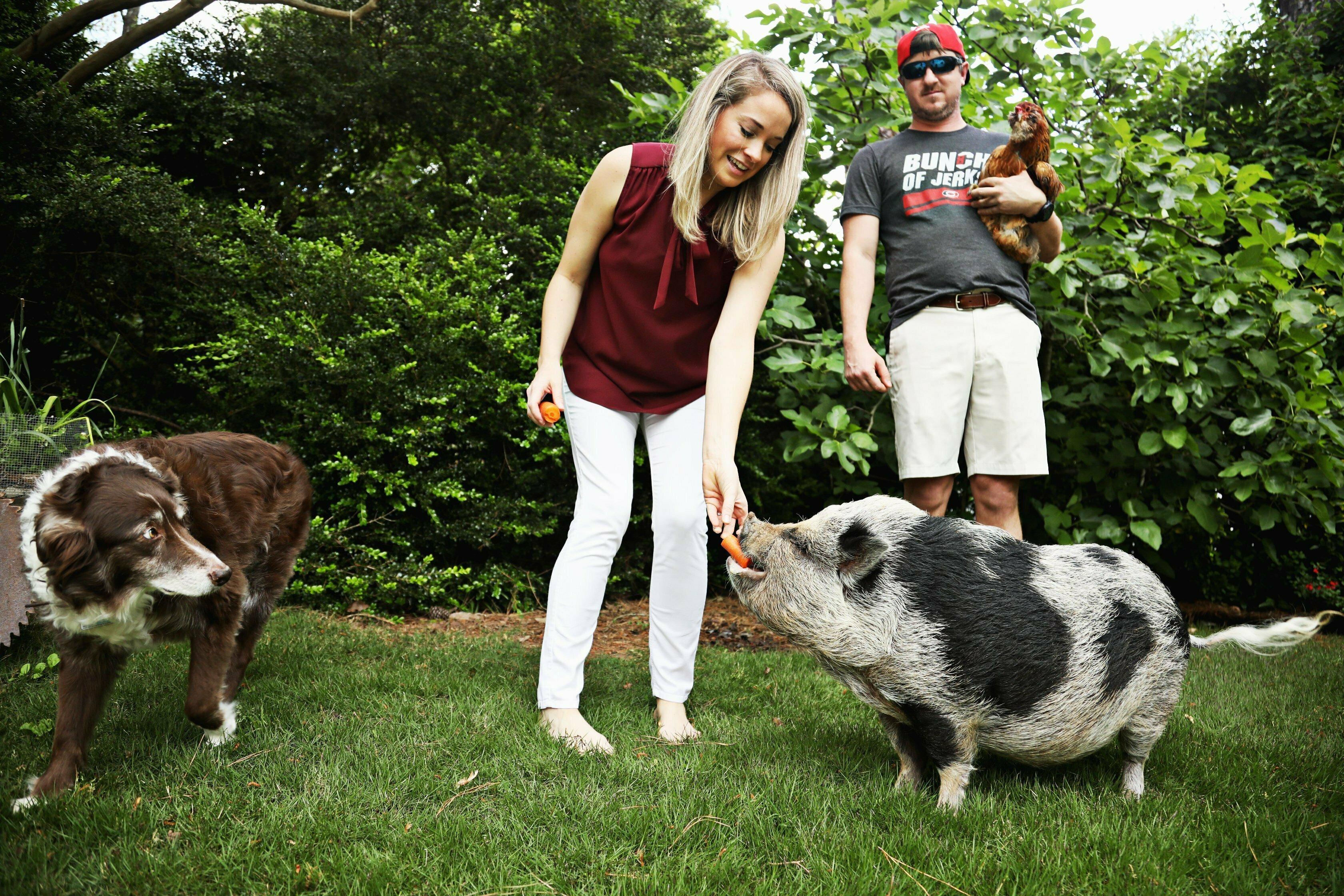Sooey! Pig named Hamilton bringing Hurricanes playoff luck