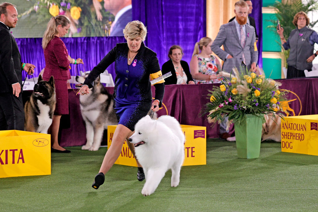 Unforgettable weekend at the 2021 Westminster Kennel Club Dog Show
